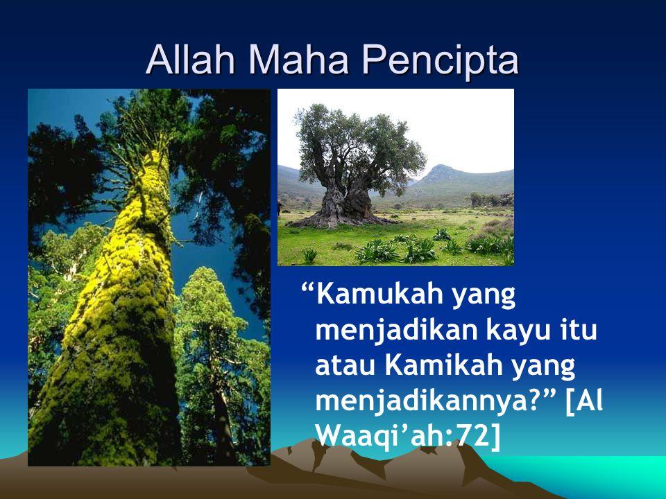 Allah Maha Pencipta Kamukah yang menjadikan kayu itu atau Kamikah yang menjadikannya [Al Waaqi'ah:72]